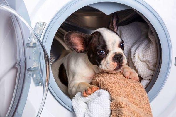 Нужно уточнить о здоровье щенка и его родителей