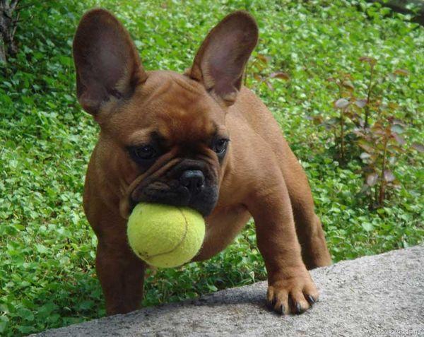 Прозвище должно соответствовать характеру пса
