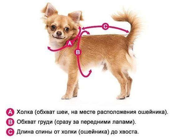 Результат пошуку зображень за запитом Выкройки для мини-собак своими руками