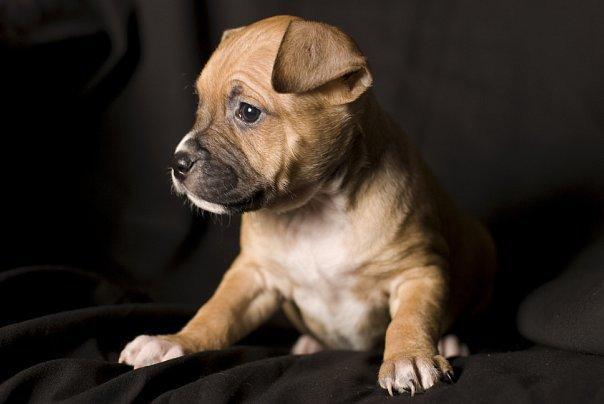 На клички собак влияет их происхождение