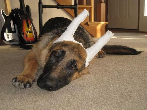 Проконсультируйтесь с ветеринаром перед процедурой