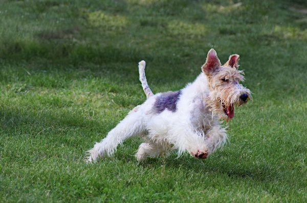 В день собакам требуется не менее 45 минут активных упражнений
