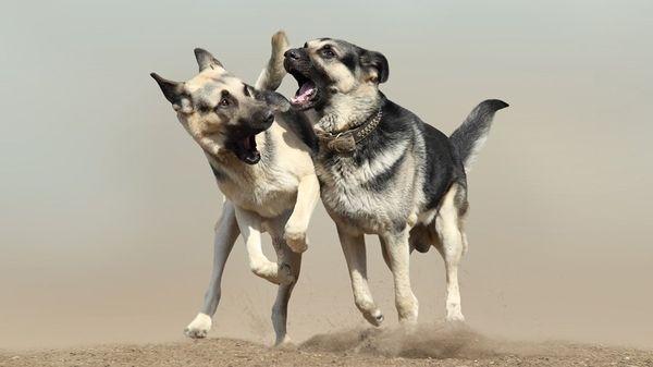 У собаки природная тяга к учению