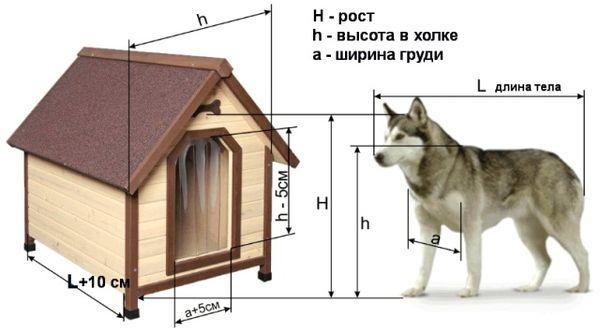 Схема расчета габаритов собаки и вольера