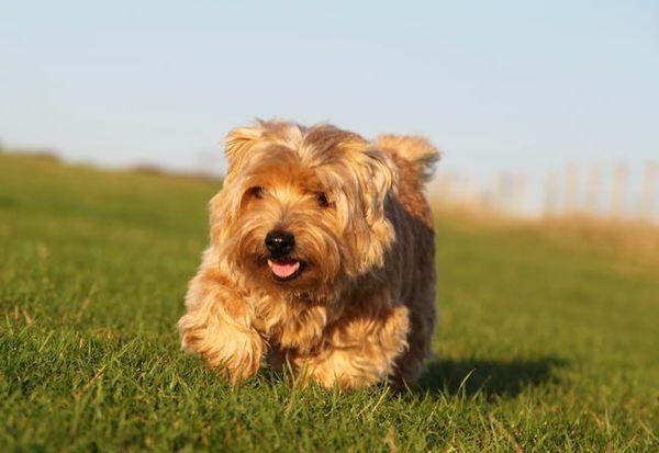 Выгуливать пса лучше 3 раза в день