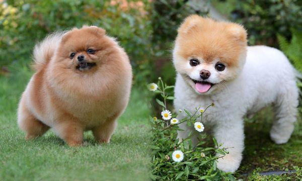 У собаки очень густая шерсть на щечках