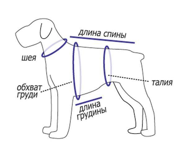 Как снимать мерки с собаки