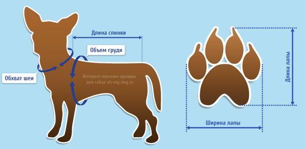 Правильное снятие мерок с собаки