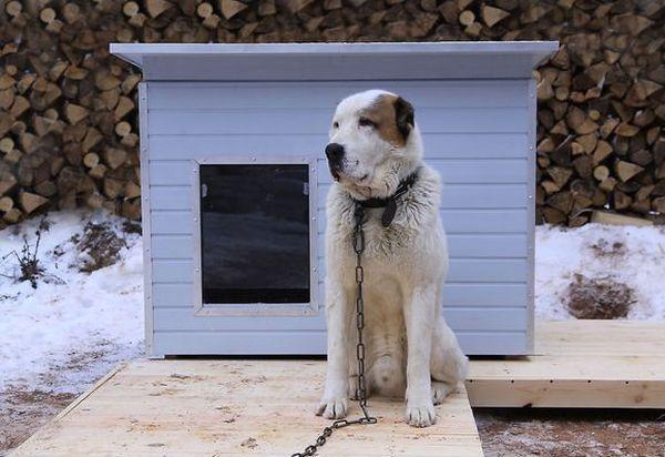 Будка для алабая – важный элемент содержания пса