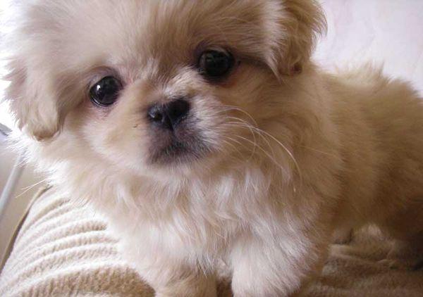 Стоимость щенков варьируется между 8 и 23 тысячами рублями