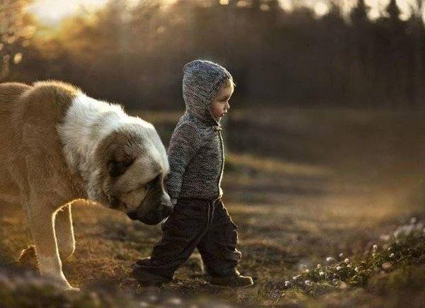 С раннего возраста щенок запоминает своего хозяина