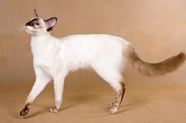 В характере кошки нет места агрессии