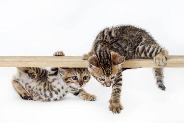 Котенкам нужно о что-то точить когти