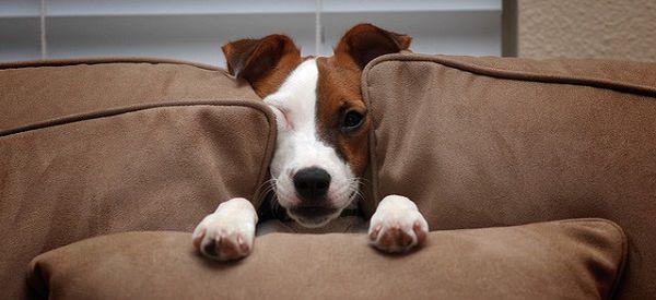 Дрессировка и воспитание собаки должны начинаться с первых дней жизни