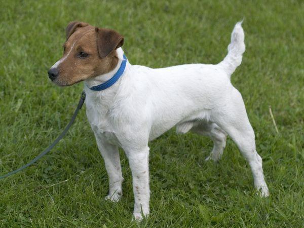 Один килограмм веса пса приравнивается 5 см роста