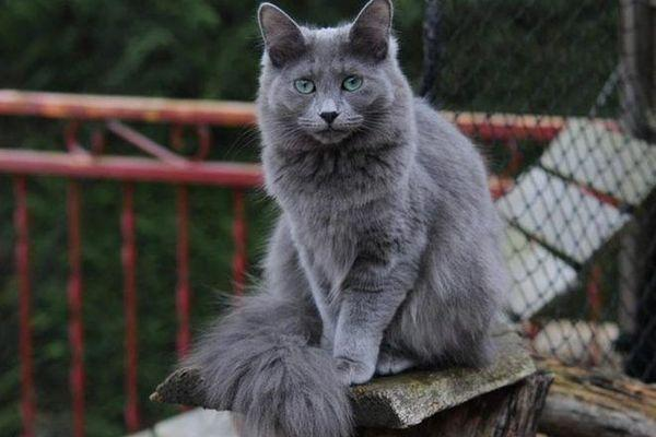 При хорошем уходе коты живут 10–18 лет