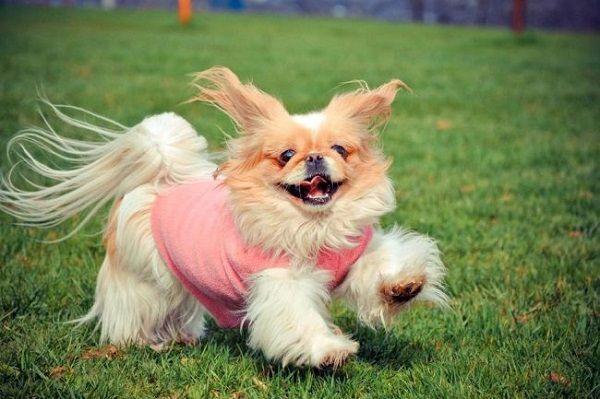 Дрессировка собаки должна опираться на ее природные особенности