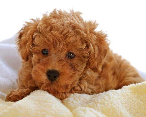Внимательно следите за малейшими изменениями в поведении собаки