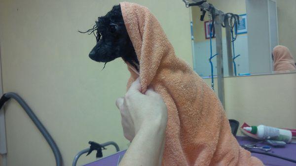 Купайте собаку теплой водой, тщательно смывая шампунь