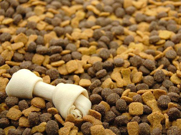 Сухой корм – более быстрый вариант питания