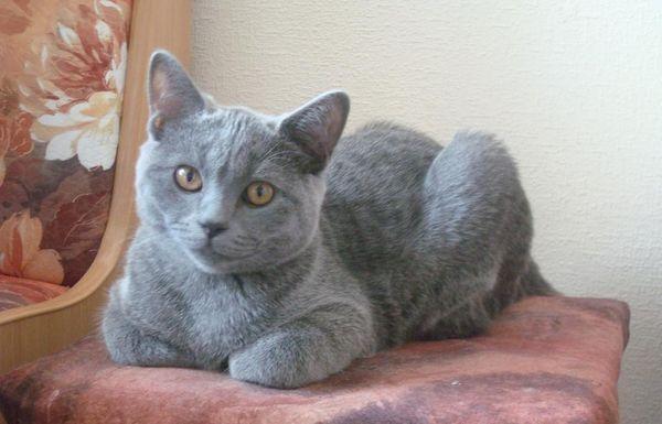 Четырехмесячный котенок уже похож на взрослое животное