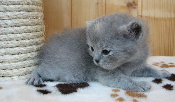 Еженедельно котенок становится тяжелее на 100 г