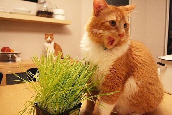 Кошки любят лакомиться травой