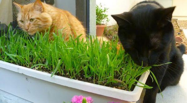 В траве присутствуют витамины