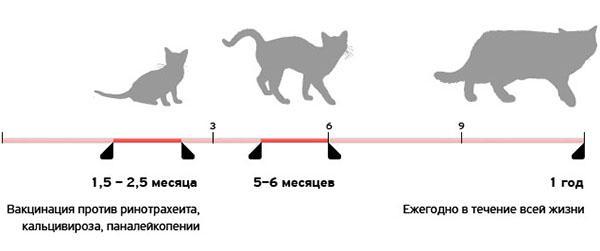 Календарь прививок для котят