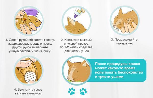 Как правильно чистить уши кошке