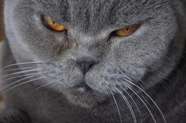 Котов кастрируют. чтобы они не метили территорию