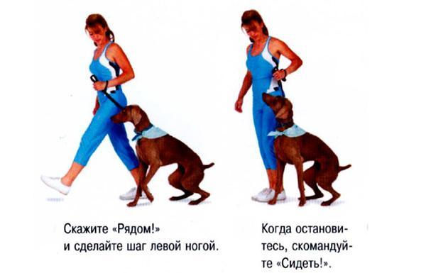 Не позволяйте собаке отдалиться от вас