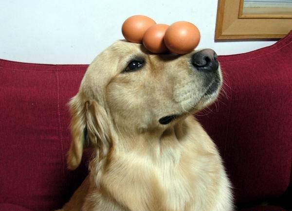 Собаку необходимо ежедневно дресировать, чтобы она была послушной