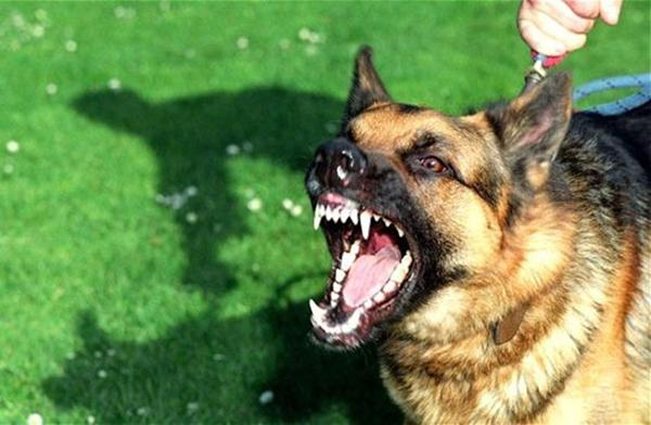 Изоляция собаки негативно сказывается на степени её социализации