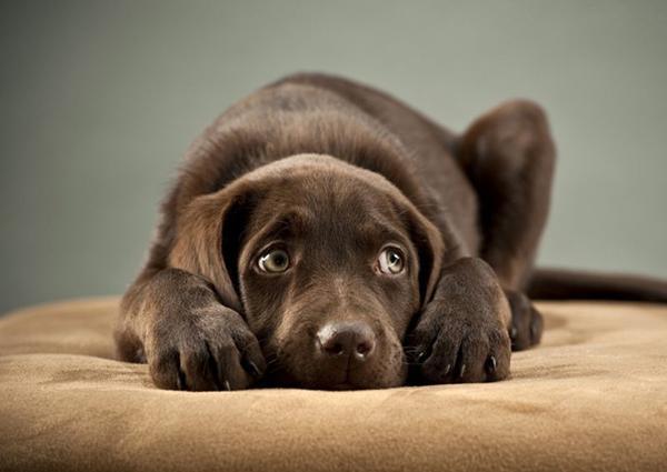 Собака может дрожать от страха