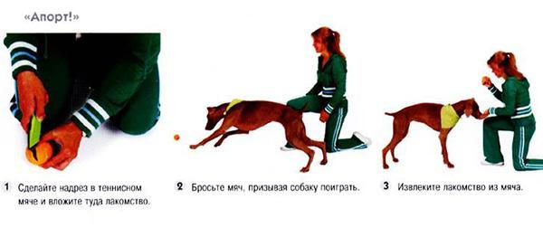Бросьте предмет, как только пес схватит игрушку, дайте лакомство