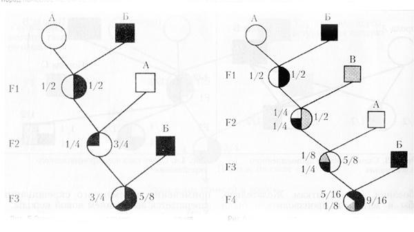 Схемы двухпородного и трехпородного переменного скрещивания