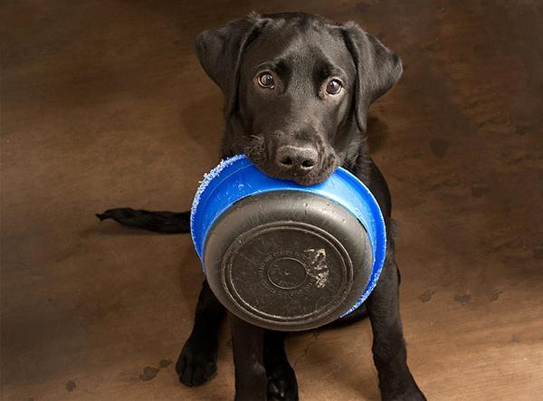 Перед операцией важно перестать кормить и поить собаку