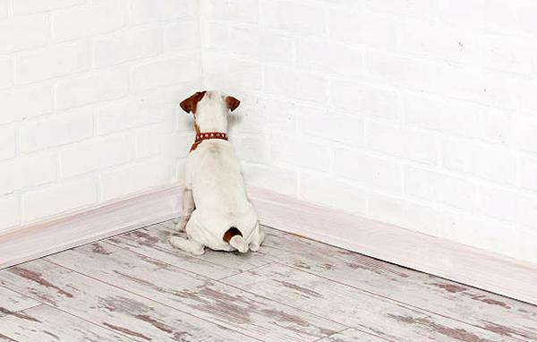 Провинившуюся собаку необходимо сразу наказывать
