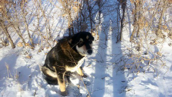 Уличные собаки часто запуганы или агрессивны