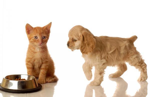 Чаще всего собакой движет любопытство