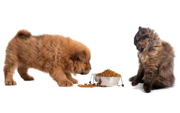 Если давать собаке кошачью еду, она ослабнет