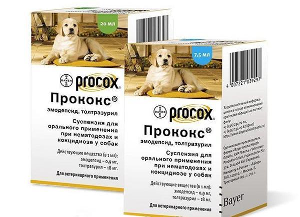 Суспензии часто используются для лечения собак от глистов
