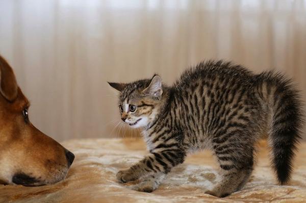 Собаки и коты не понимают вербальные сигналы друг друга
