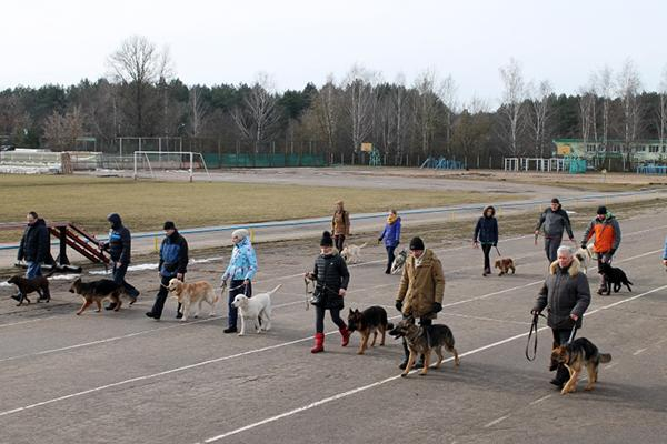 ОКД - школа, в которой происходит коррекция поведения собак