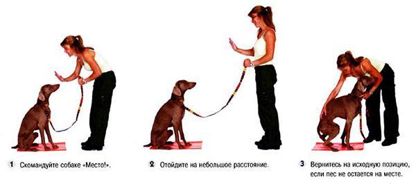 Нужно возвращать пса на место каждый раз, как он от него уходит