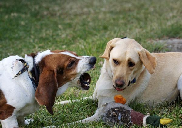 Агрессия к другим животным может перерасти в агрессию к людям