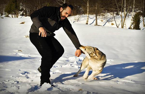 Нужно прекратить игру, если пес начинает кусаться
