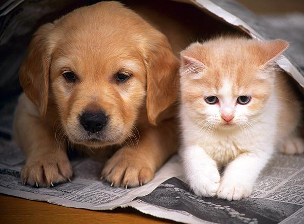 Рекомендуется завести собаку и кота одновременно