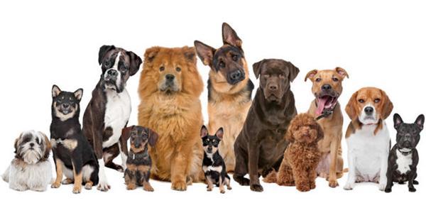 Корм для собаки должен подбираться с учетом породы, состояния здоровья